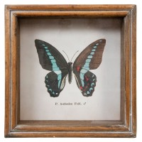 """Tablou """"Blue Butterfly"""", Clayre&Eef"""