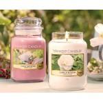 Lumanare Parfumata Borcan Mediu Camellia Blossom, Yankee Candle