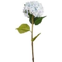 Floare decorativă hortensie