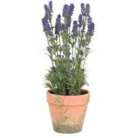 Lavanda decorativa in ghiveci, Clayre & Eef